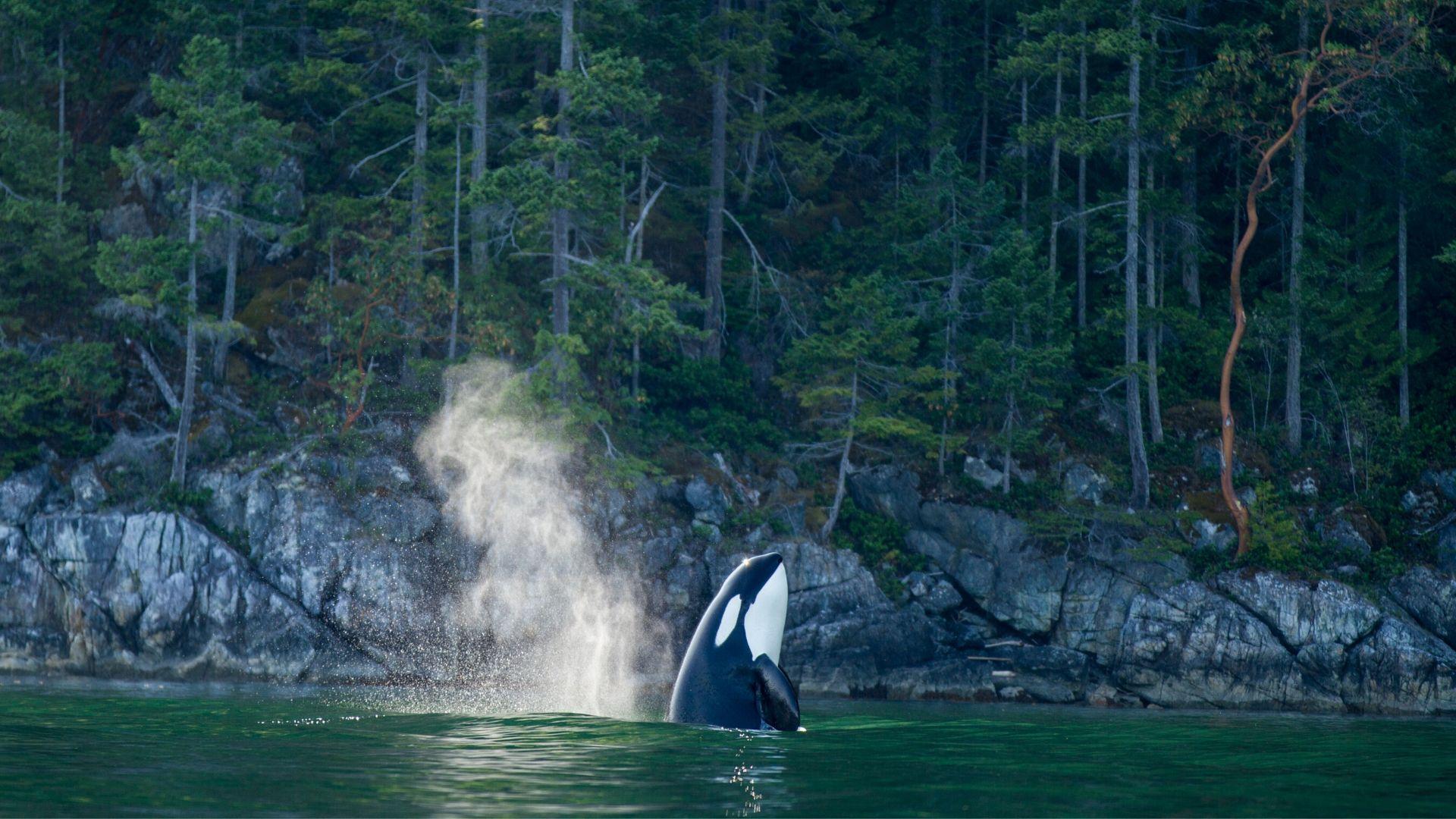 HBA-Nimmo-Bay-Resort-Canada-whalewatching