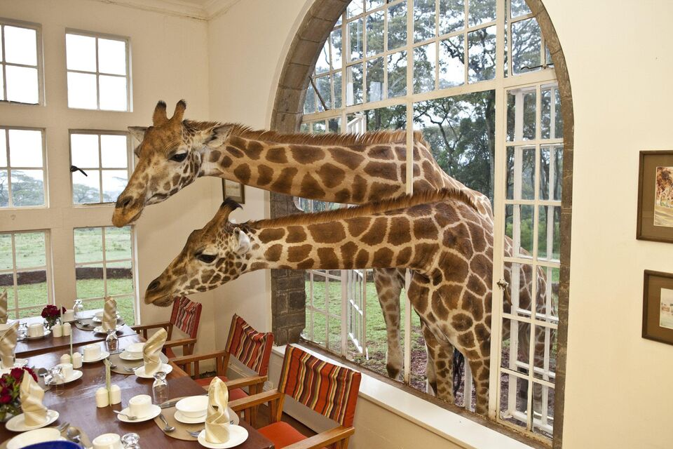 On Safari: Giraffe Manor
