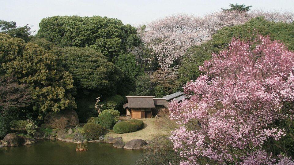 Japan Celebrates The Art Of The Tea Ceremony