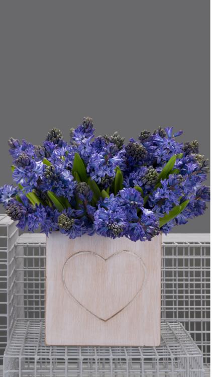 8 Stunning Valentine's Day Bouquets