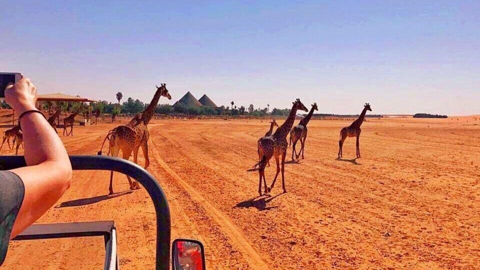 8 Things To Do In Saudi Arabia This November