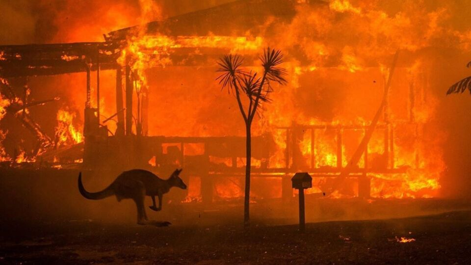 Australia Is Burning, Here's How You Can Help