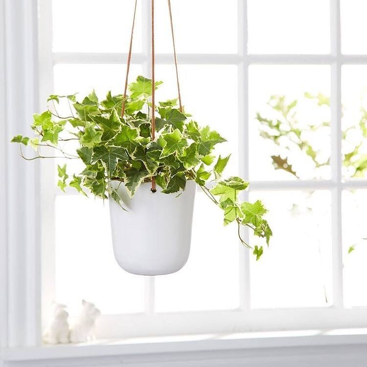The Best Air-Purifying Plants For Your Home