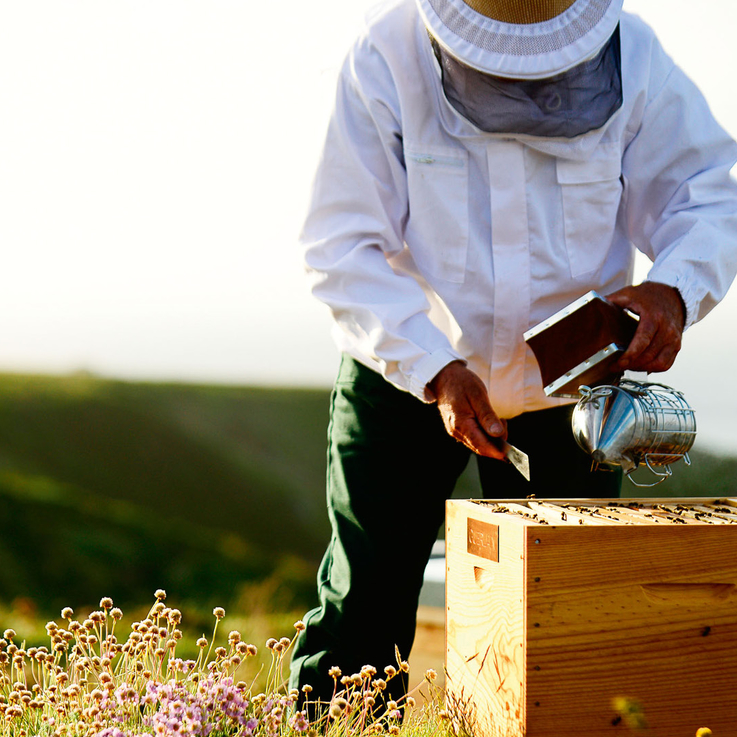 How Guerlain Plan To #SaveTheBees And Achieve Carbon Neutrality By 2028
