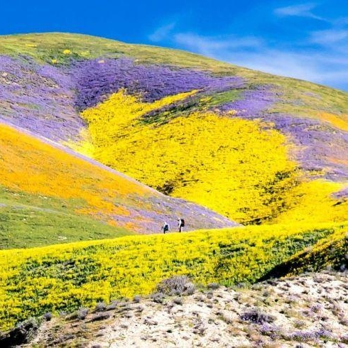 """California's Rare """"Super Bloom"""" Is Moving North Into The Central Valley"""