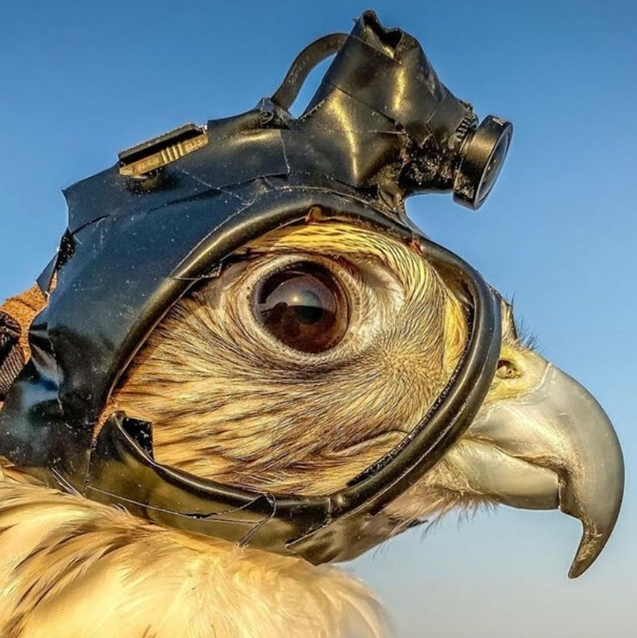 Yes, Sheikh Hamdan's New Cameraman Is An Actual Falcon